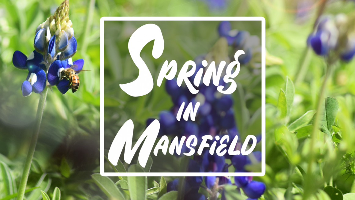 spring in mansfield