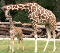Fort Worth Zoo, Texas